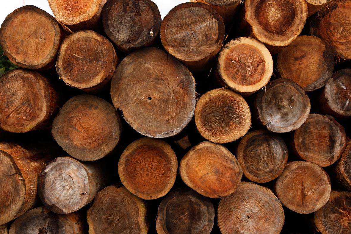 馬搬で運ばれた宮城県産の杉を使った家具のストーリーを売る